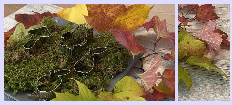 Herbst & Pflanzen